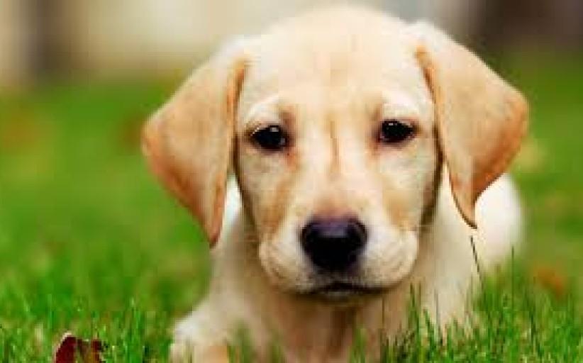 Seimas atšaukė priverstinį gyvūnų ženklinimą