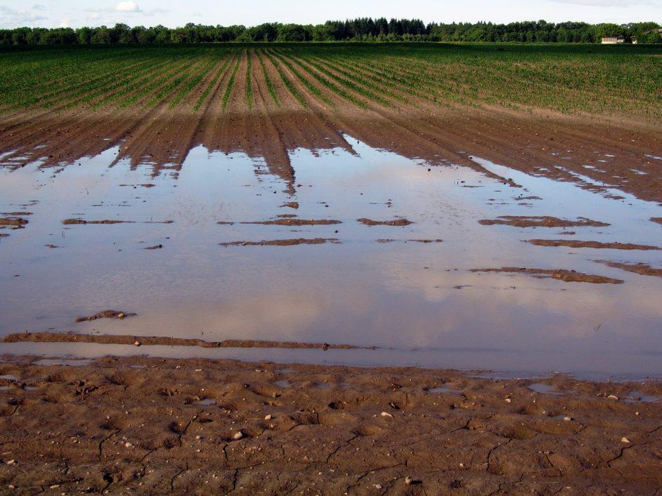 Nuo lietaus sukeltų nuostolių kenčiantiems ūkininkams – force majeure pažymos