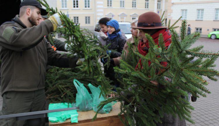 """Akcijos """"Parsinešk Kalėdas į savo namus"""" metu išdalinta tūkstančiai nemokamų eglučių šakų ir 10 tonų kankorėžių"""