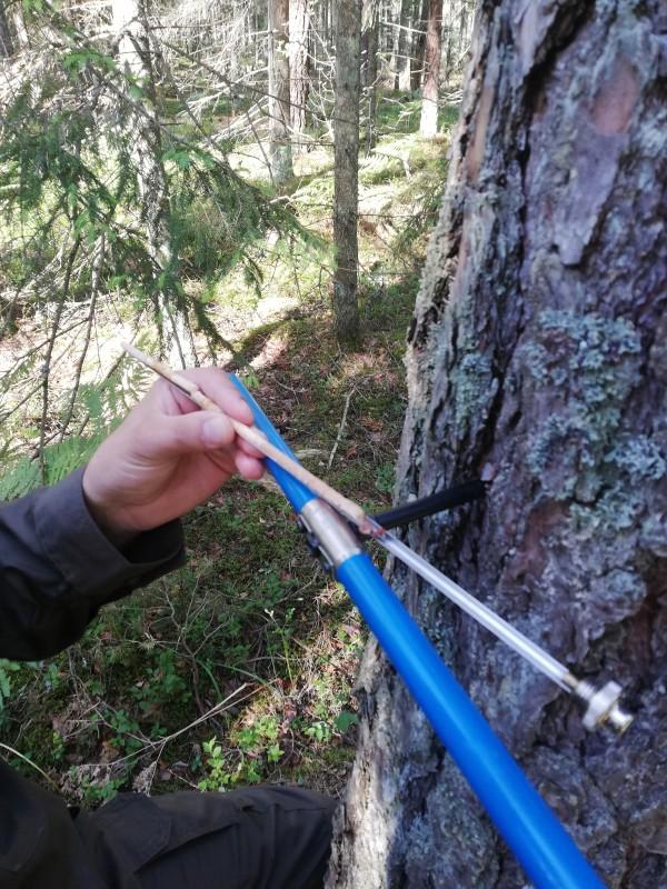 Apie taksatoriaus darbo ypatumus pasakoja VĮ Valstybinių miškų urėdijos taksatorius Marius Megelinskas